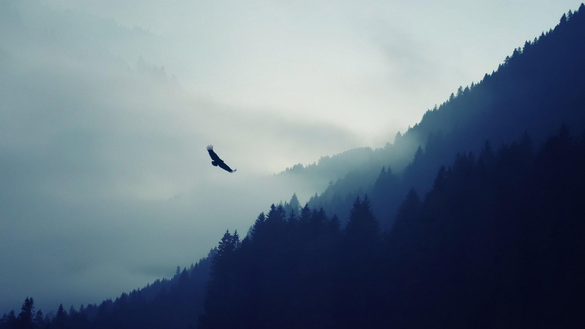 VIDEOIl segreto per metter le ali al bene e volare dove nessuno pensa sia possibile - Fondazione Angelo Affinita