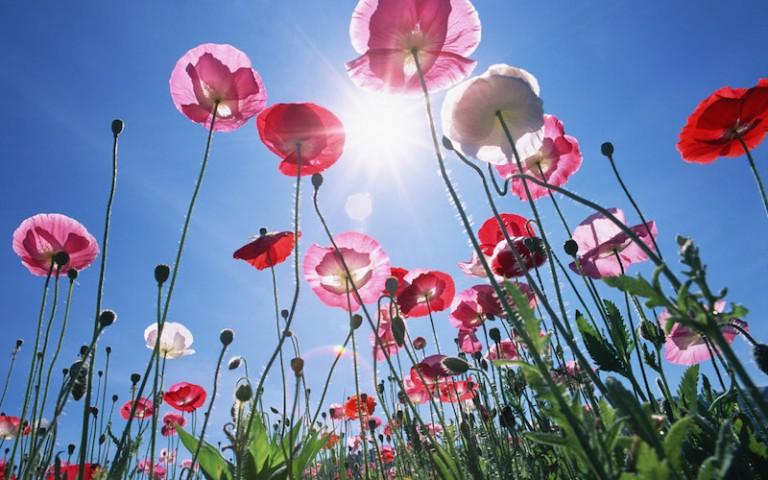 Come-si-puo-rinascere-sognare-e-fiorire-di-nuovo-anche-dopo-la-violenza-la-fuga-la-paura-Ascolta-la-testimonianza-di-Mirela-Fondazione-Angelo-Affinita