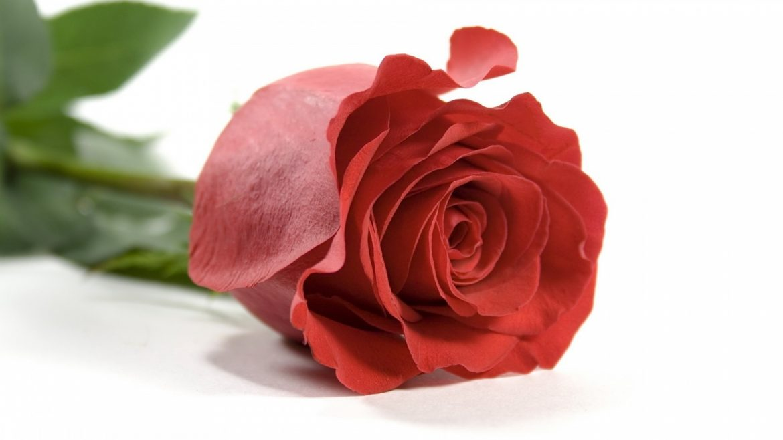 Oggi-ti-regalo-una-rosa-qual-il-segreto-di-una-famiglia-felice-Fondazione-Angelo-Affinita